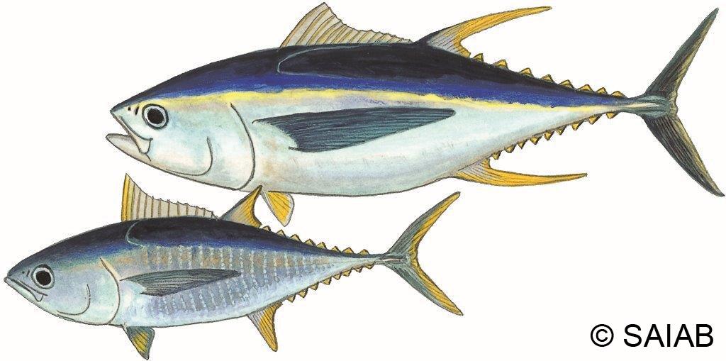 fish detail wwf sassi